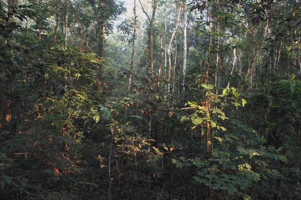 The Asteroid That Killed the Dinosaurs Created the Amazon Rain Forest