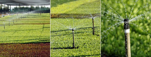 Rainbird Watering System