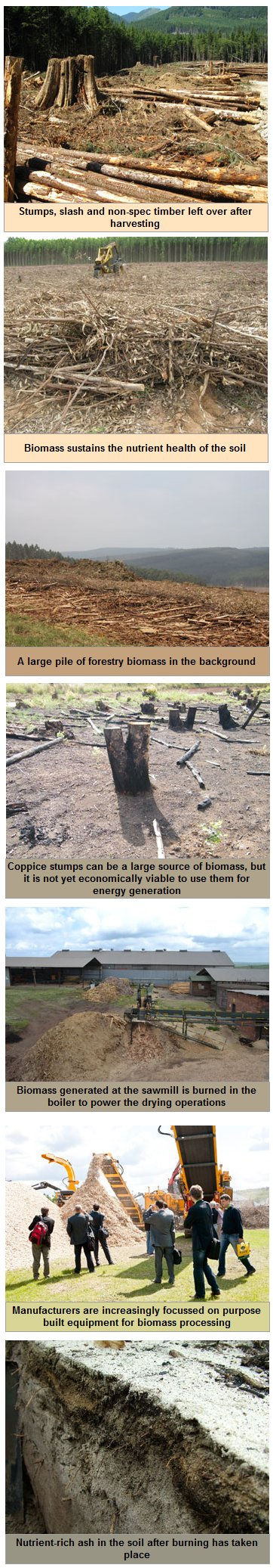 The role of biomass in sustainable stand productivity