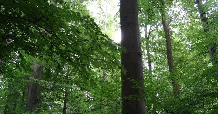 High Speed Trees Generate Electricity From Wind