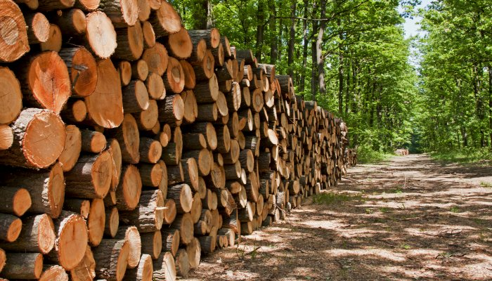 Positive Outlook For Forestry Sector Forestry South Africa