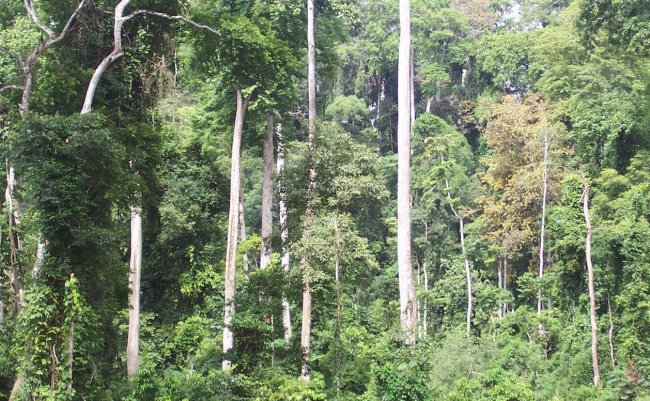 Developing sustainable forest ecosystems in Africa will help boost its economy