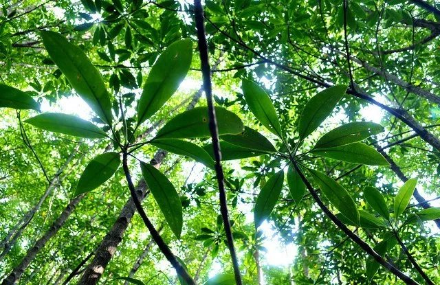Green Climate Fund steps up to reduce deforestation and forest degradation