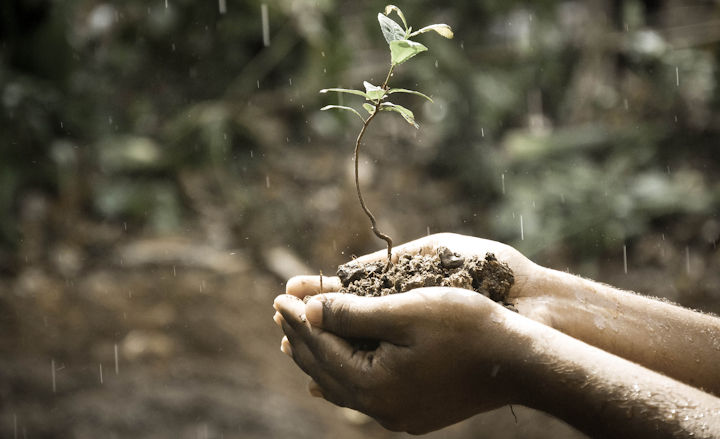 Husqvarna helps reforest South Africa