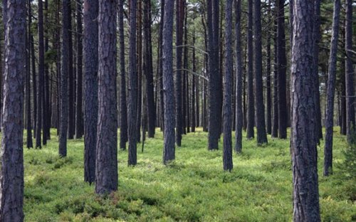 Mozambique: Mozambican Forests Under Threat, Warns Minister