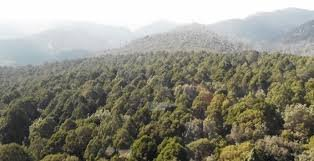 Kenya turns to science to help improve forest cover
