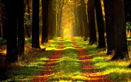 7 secrets that forests are keepings from you