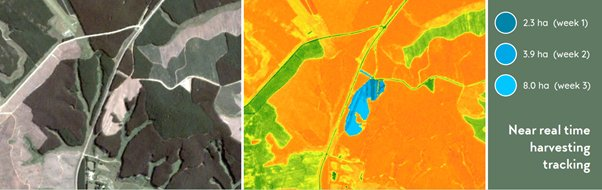 Near Real Time Forestry Monitoring Innovation
