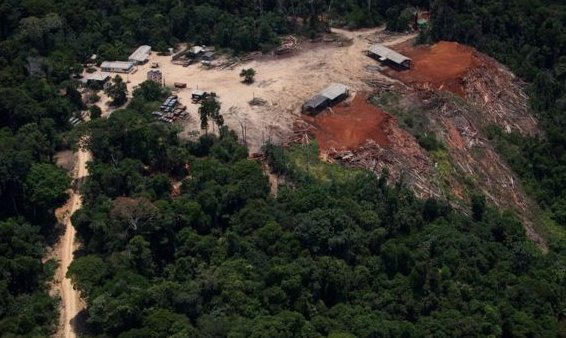 Brazil's top court approves controversial forestry law