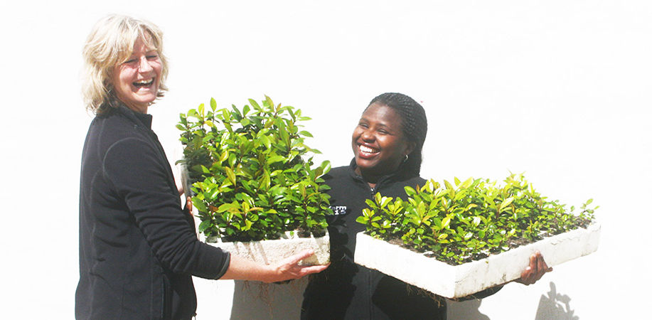 Women Presidents' Organisation and South African Reforestation Trust team up to plant 10 000 trees