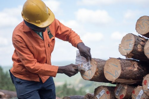International forest certification body PEFC endorses locally developed South African standard