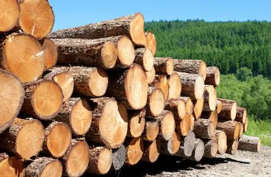 Wood density at risk in changing growing conditions