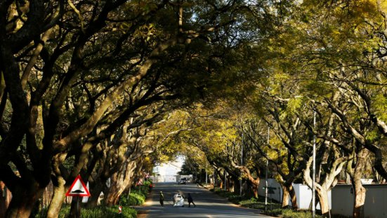 Johannesburg has an estimated 6 to 10 million trees, mostly non-native species brought in from around the world. AP PHOTO/DENIS FARRELL