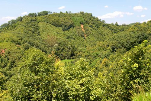 Species-rich forests store twice as much carbon as monocultures