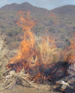 Pinning down the period for increased risk of fire in the African savannas