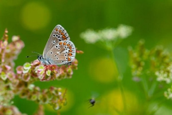 Butterflies thrive in grasslands surrounded by forest