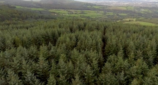 Forestry cover at highest level 'in over 350 years'