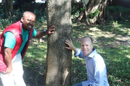 Mysterious fungus threatens local trees