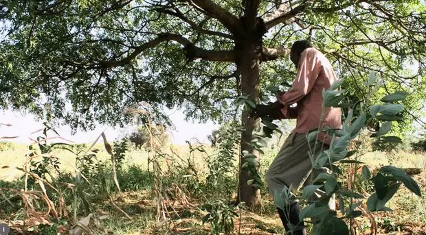 Kenya to plant 2 billion tree seedlings by 2022 to increase forest cover