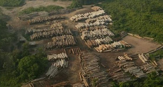 China appears to be tackling the problem of illegal timber and logging in a new forest law