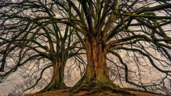 Scientists Discover That Trees Have A