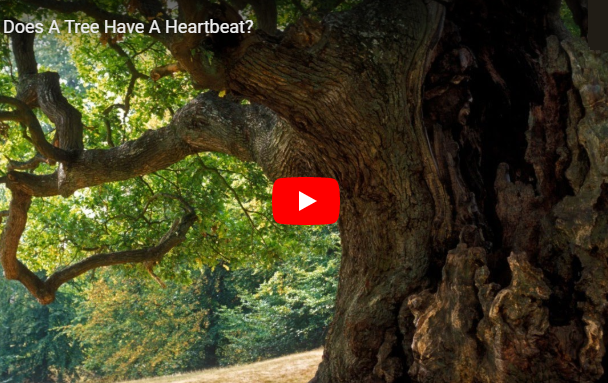 Does a Tree have a heartbeat?