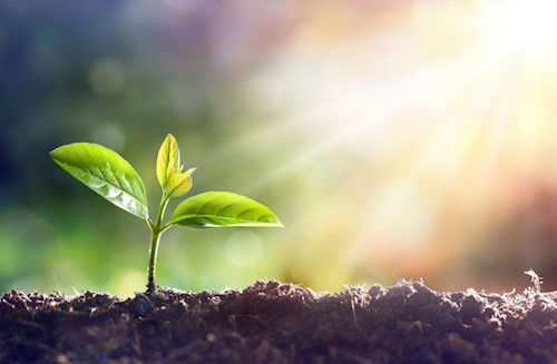 Shining a light on the protection mechanism of plants against excess sunlight