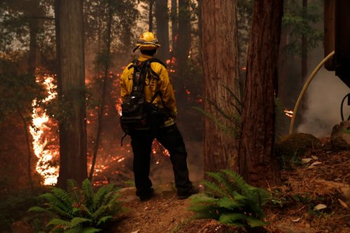 California fires: State, feds agree to thin millions of acres of forests