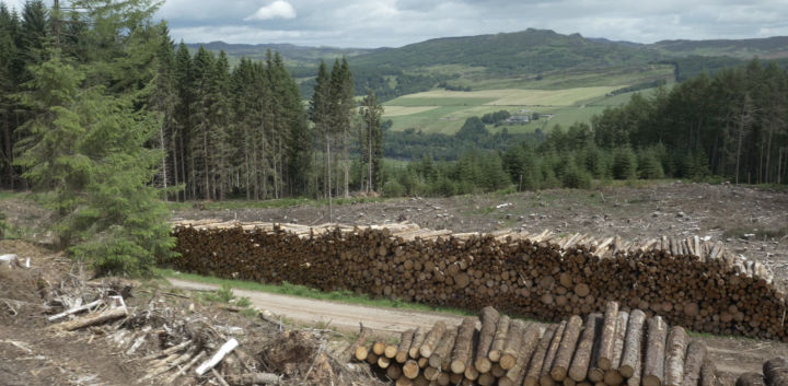 Planted forest managed by Forestry and Land Scotland, Perthshire, UK