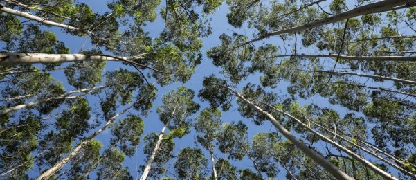 Three SA researchers shortlisted in international forestry research award
