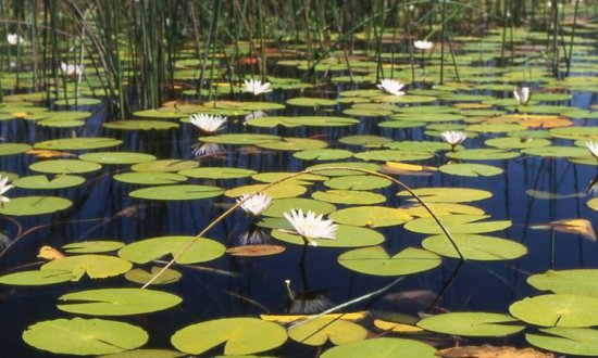 Celebrating Wetlands in South Africa and their contribution to water resource management