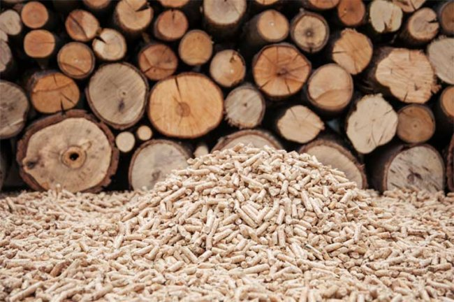 Forest activists fear that the last old growth forests in British Columbia could be reduced to wood pellets burned abroad for energy. Image found on Flickr.