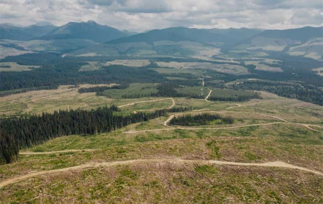 Anzac Valley clearcuts in British Columbia's boreal rainforest. Image by Taylor Roades courtesy of Stand.earth.