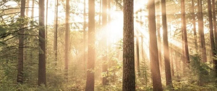 Forests not only help combat climate change; they are vital for our health and livelihoods. Image: Unsplash/Maxim Hopman