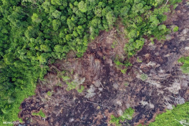 Drained, cleared, and burned peat forest in Indonesian Borneo. Photo by Rhett A. Butler
