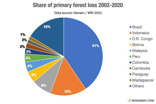 Share of Primary forest loss