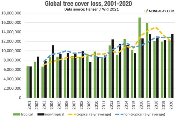 Global forest loss increased in 2020