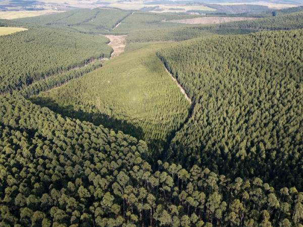 RB Timber Group - Plantations
