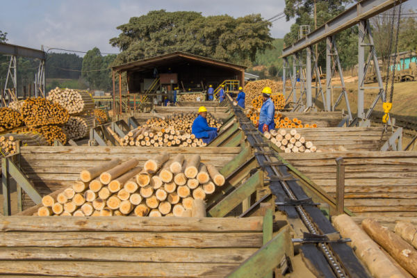 RB Timber Group - Pole Processing