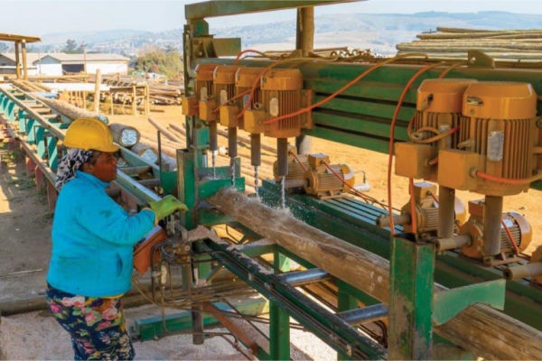 RB Timber Group - Pole Processing_2