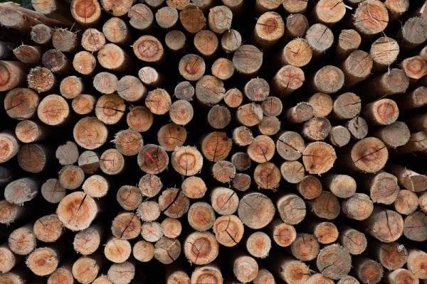 RB Timber Group - Poles