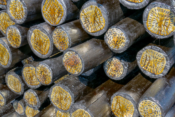 RB Timber Group - Treated Poles