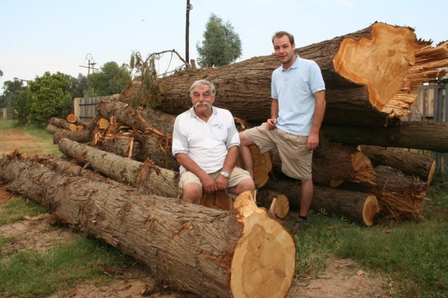 Plantation Sawmilling_1