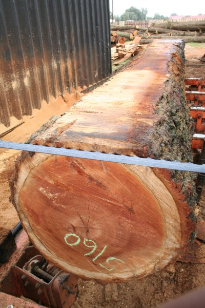 Plantation Sawmilling_2
