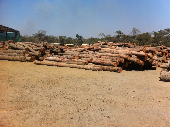 Plantation Sawmilling_4